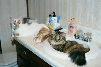 bathroombuddies1.jpg